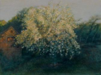 'The Old Apple Tree'  R Payn